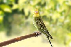 El pájaro está en un fondo verde Fotos de archivo