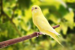 El pájaro está en un fondo verde Imágenes de archivo libres de regalías