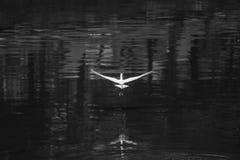 El pájaro está sacando Imagen de archivo libre de regalías