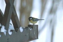El pájaro grande del Tit se sienta en alimentador de madera Fotografía de archivo