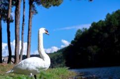 El pájaro grande tiene pelo blanco fotos de archivo