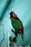 El pájaro hermoso se está sentando en el árbol Imagen de archivo