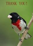 El pájaro le agradece cardar imagen de archivo libre de regalías