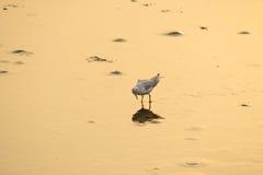 El pájaro mira en el espejo Fotos de archivo libres de regalías