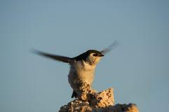 El pájaro practica el agitar de las alas Imagenes de archivo
