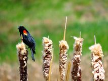 El pájaro que se sienta Imagen de archivo