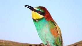El pájaro salvaje hermoso canta metrajes