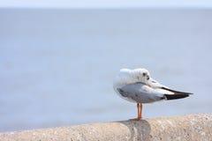 El pájaro se atusa sus plumas encendido en el puente del carril, fondo Imagen de archivo libre de regalías