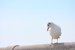 El pájaro se atusa sus plumas encendido en el puente del carril, fondo Imagen de archivo