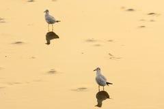 El pájaro se coloca en superficie del agua Imagenes de archivo