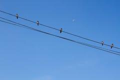 El pájaro se encaramó en el cable eléctrico en fondo del cielo azul Fotografía de archivo