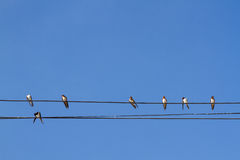 El pájaro se encaramó en el cable eléctrico en fondo del cielo azul Imagen de archivo libre de regalías