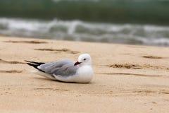 El pájaro se está preparando para tomar resto Imágenes de archivo libres de regalías