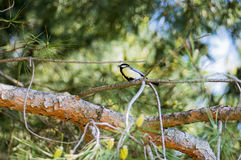 El pájaro se sienta en una rama de árbol imagen de archivo