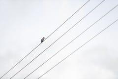 El pájaro solo Imagenes de archivo