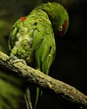 El pájaro tímido Foto de archivo libre de regalías