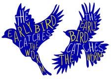 El pájaro temprano coge el gusano Proverbio escrito mano, pájaro del VECTOR Palabras azules del pájaro, amarillas y blancas Foto de archivo libre de regalías