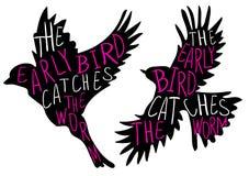 El pájaro temprano coge el gusano Proverbio escrito mano, pájaro del VECTOR Palabras negras del pájaro, magentas y blancas Fotos de archivo
