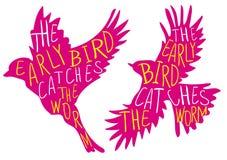 El pájaro temprano coge el gusano Proverbio escrito mano, pájaro del VECTOR Palabras rosadas del pájaro, amarillas y blancas Fotografía de archivo libre de regalías
