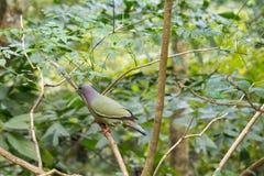 El pájaro verde encaramó sorprender hermoso de la naturaleza de la mañana de la naturaleza de la fauna de los árboles Imágenes de archivo libres de regalías