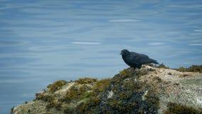 El pájaro vuela de rocas por el agua