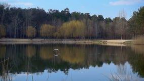 El pájaro vuela sobre el lago