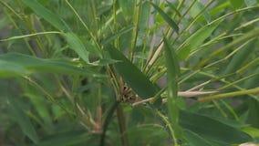 El pájaro y la naturaleza del fondo del bambú y del viento suenan almacen de metraje de vídeo