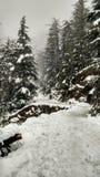 El país de las maravillas del invierno/las nevadas nevadas coronadas de nieve del bosque del admist de la trayectoria del camino  Imágenes de archivo libres de regalías