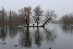 El pabellón blanco del lago, de Venus y la colonia de grajos en Gatchina parquean fotografía de archivo