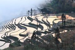 El paddyfield de la terraza de Hani Foto de archivo