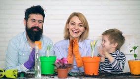 El padre, la madre y el hijo están aplaudiendo en la palma y están mirando la cámara cerca de los potes con las flores que acaban almacen de video