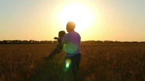 El padre que llevaba a cabo las manos de su hijo hacía girar en un campo de trigo contra la perspectiva de puesta del sol almacen de video