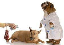 El pagar cuenta del veterinario imagenes de archivo