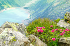 El paisaje alpino hermoso florece las montañas, Austria Imagenes de archivo