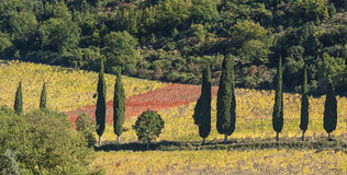 El paisaje alrededor de la abadía Románica de Sant Antimo es un monasterio benedictino anterior en el comune de Montalcino Fotos de archivo libres de regalías