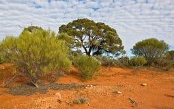 El paisaje australiano Imagen de archivo libre de regalías
