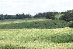 Paisaje colorido con el campo y los arbustos Imagen de archivo libre de regalías