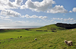El paisaje costero jurásico de Dorset, Inglaterra Foto de archivo