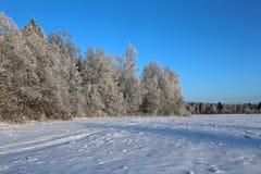 El paisaje de árboles nevados es spruce y abedul Imagen de archivo libre de regalías