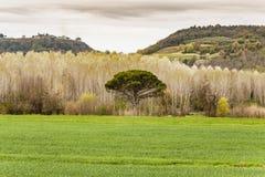 El paisaje de Chianti imagenes de archivo