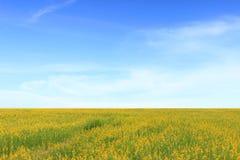 El paisaje de la flor del prado imagenes de archivo
