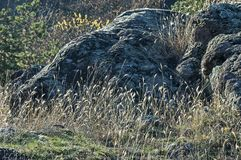 El paisaje de la naturaleza otoñal con la montaña, la hierba seca y el rosk colocan en montaña balcánica Foto de archivo libre de regalías