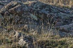 El paisaje de la naturaleza otoñal con la montaña, la hierba seca y el rosk colocan en montaña balcánica Imágenes de archivo libres de regalías