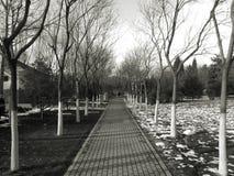 El paisaje de la nieve Fotografía de archivo libre de regalías