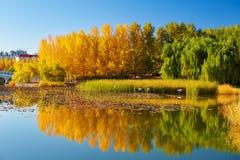 El paisaje de la orilla del lago del otoño Fotos de archivo