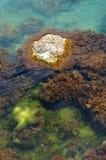 El paisaje de la piedra con el musgo en el mar Fotos de archivo