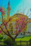 El paisaje de la primavera en Estambul Foto de archivo