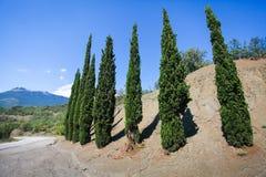 El paisaje de los árboles de ciprés rema a lo largo del camino lateral en el campo de Crimia Fotografía de archivo