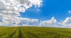 El paisaje de los campos de hierba verde debajo del cielo azul con las nubes blancas, movimiento de time lapse, naturaleza y se r