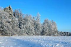 El paisaje del campo nevado y los árboles son spruce y abedul Imagen de archivo